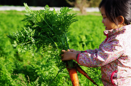 農業体験デー